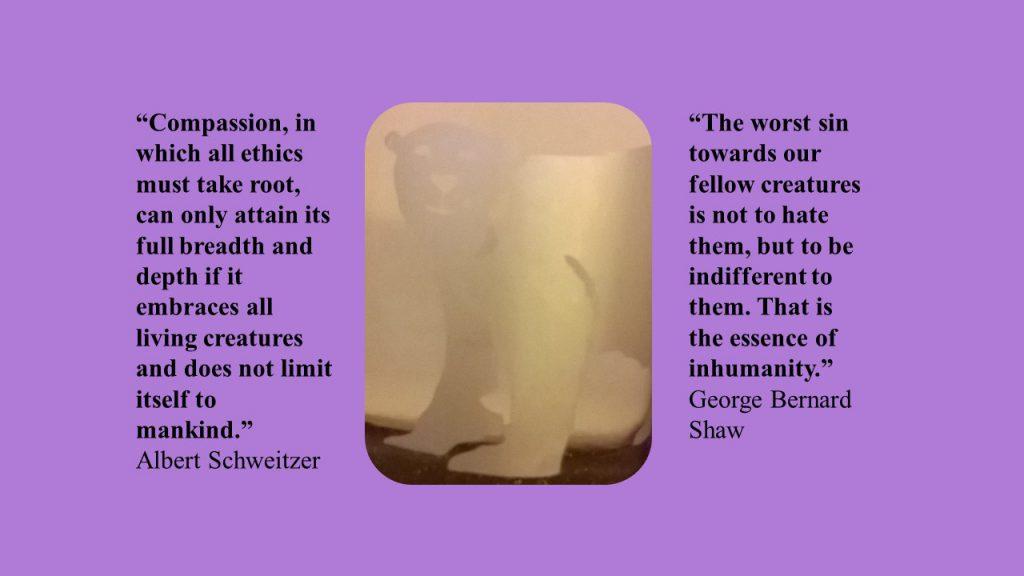 polar bear citat 2