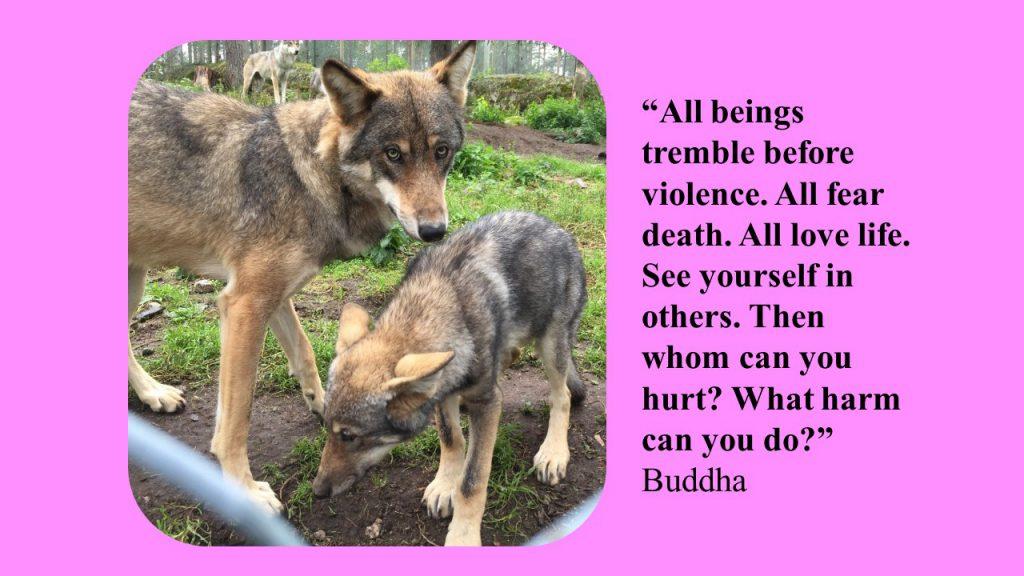 buddha citat